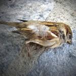 vogel dood